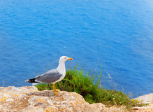Sea bird on mediterranean sea in Balearic islands Stock Image