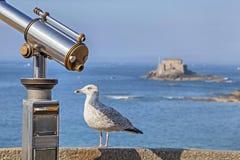 Sea bird near of tourist telescope in Saint-Malo, France Royalty Free Stock Images
