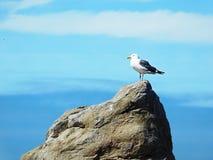 Sea Bird on Rock in Ocean Stock Image