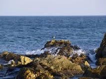 Sea bird on the rock with wave. Sea landscape with bird on the rock and waves Stock Image