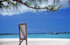 Sea Bird on Sign - some grain visible. A sea bird sits on a sign on the white sandy beach of Stocking Island in the Bahamas royalty free stock image