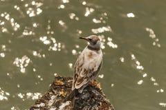 Sea bird Stock Image