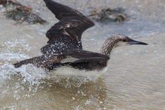 Sea Bird swim on the water Stock Photos
