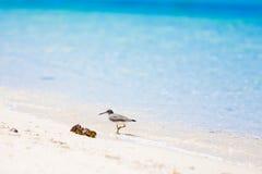 Sea bird tropics Stock Images