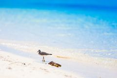 Sea bird tropics Royalty Free Stock Images