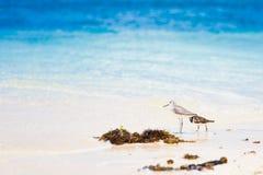 Sea bird tropics Royalty Free Stock Photo