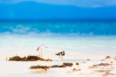 Sea bird tropics Royalty Free Stock Photo