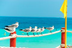 Sea birds Stock Photos