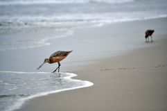 Sea birds on the beach Stock Image