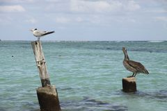 Sea birds on the beach royalty free stock image