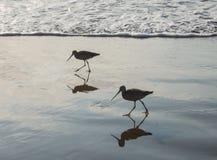 Sea birds on the beach Stock Photos
