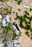 Sea birds at bempton cliffs. Sea bird colony at bempton cliffs Royalty Free Stock Photo