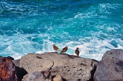Sea Birds Stock Images
