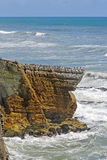Sea Birds on a Coastal Promontory Stock Images