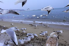 Sea birds commotion Stock Images