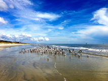 Sea Birds Gathered on Coast Royalty Free Stock Photos