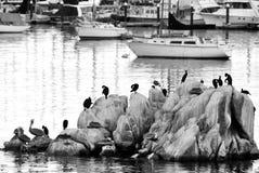 Sea birds in harbor royalty free stock photo