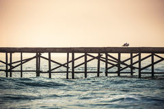Sea birds looking from a water bridge Stock Photography