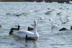 Sea birds Stock Images