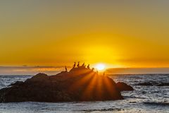 Sea birds perched on a rock at sunset royalty free stock images
