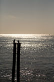 Sea birds on posts silhouette. Birds on pilings in the sea at sunrise in silhouette Stock Images