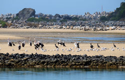Sea birds refuge. Sea birds take refuge on a sand spit when the tide is low. Multiple species crowd together in the available space Stock Image