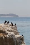 Sea birds on the rocks Royalty Free Stock Images