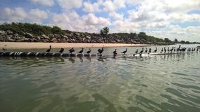 Sea birds on the sea Stock Image