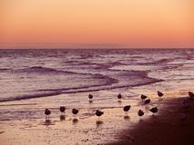 Sea birds at Sunset royalty free stock image