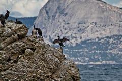 Sea birds Stock Photo
