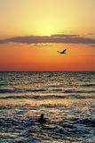 Sea birds at sunrise. Sunrise Romania Vama Veche beach in the summer with two silhouettes Royalty Free Stock Photo