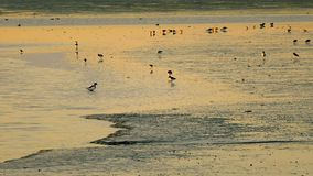 Sea birds in a sunset Royalty Free Stock Photo