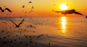 Sea and birds at the sunset. Sea and birds with beautiful of nature at the sunset Royalty Free Stock Image
