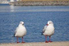 Sea birds at Tokyo Bay Royalty Free Stock Photos
