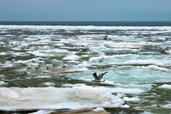 Sea, Black Sea, sun, water, winter, Odessa, Ukraine, water, sky, foam, waves. Gulls, ice, iceberg, Royalty Free Stock Photography