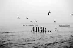 Sea black and white image. Sea scene in black and white Stock Image