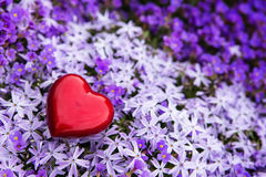 Sea of blossoms with a romantic red heart Stock Image