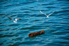 Birds flying in the sea. stock images