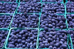 Sea of Blueberries Horizontal Stock Photography