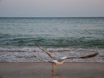 Sea, Body Of Water, Shore, Beach stock image