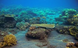 Sea bottom with coral reef. Tropical seashore inhabitants underwater photo. Stock Photos