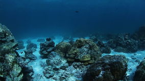 Sea bottom with coral reef stock footage