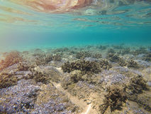 Sea bottom in Greece Stock Image