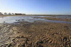 Sea Bottom during Low Tide Royalty Free Stock Photo