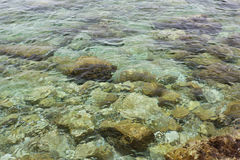 Sea bottom. Rocks on the bottom of the sea, clear water Stock Photo