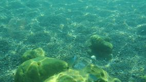 Sea bottom under water. Waters of the Adriatic, Montenegro. Text stock video footage