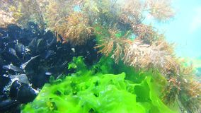 Sea bottom under water. Waters of the Adriatic, Montenegro. Text stock footage