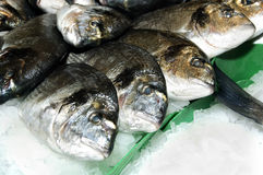 Sea bream Royalty Free Stock Photography