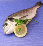 Sea bream stock images