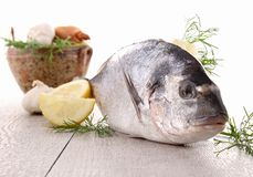 Sea bream Royalty Free Stock Image